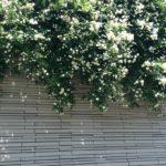《花の道のり》大阪 京都 ~薔薇~ 5月上旬 GW